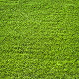 Green grass surface Royalty Free Stock Photography