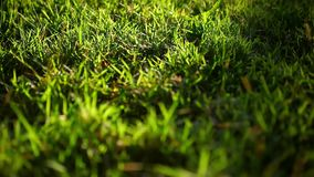 Green grass surface on the sunset. Video with. Shift, change in focus and bokeh. 1920*1080 stock footage