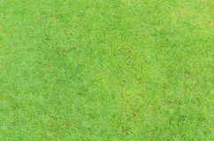 Green grass surface Stock Photography