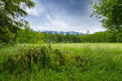 Green Grass Surrounded by Green Trees at Daytime Stock Photo
