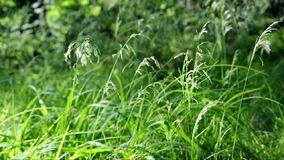 Green grass stock footage