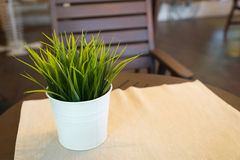 Green grass on the table Royalty Free Stock Photography