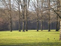 Green Grass and Tall Trees. This is a shot of some tall trees and green grass in a park stock photo