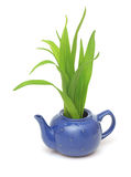 Green grass in teapot Stock Photography