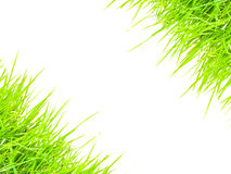 Green grass for text frame Stock Image