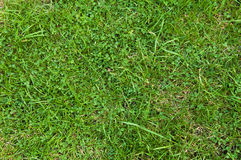 Green Grass Texture. A green grass texture to be easily used in any design - enjoy Royalty Free Stock Photography