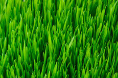 Green Grass Texture Royalty Free Stock Photos