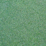 Green grass texture. Texture of green grass on the field Royalty Free Stock Image