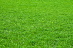 Green grass texture. Texture of nature Stock Photo