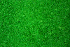 Green grass texture. Beautiful green grass texture from golf course Royalty Free Stock Images