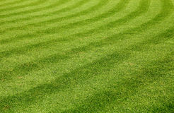 Green grass texture Royalty Free Stock Image