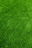 Green grass texture. Photo of the beautiful green grass texture Royalty Free Stock Images