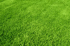 Free Green Grass Texture Royalty Free Stock Photos - 29003848