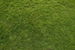 Green Grass Texture Stock Image
