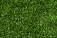 Green grass texture. Beautiful green grass texture, background Royalty Free Stock Photography