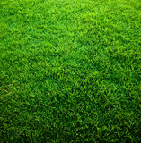 Green Grass Texture Stock Image