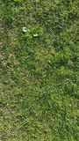 Green grass texture. Abstract texture. / wallpaper Royalty Free Stock Images