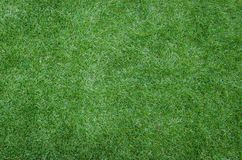 Green grass texture as background Royalty Free Stock Images