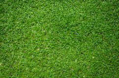 Green grass texture as background Stock Images