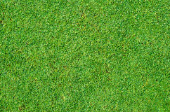 Green grass texture and backgroud Royalty Free Stock Photography