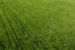 Green grass texture for background stock photos