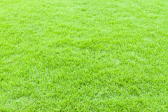 Green grass texture and background Royalty Free Stock Photography