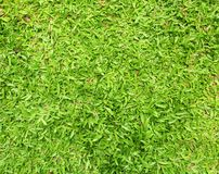 Green grass texture background Royalty Free Stock Photo