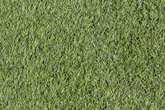 Green grass texture Stock Images