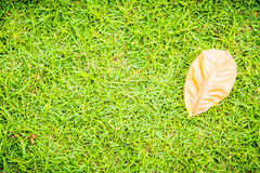Green grass texture , for background Royalty Free Stock Images