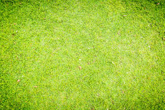 Green grass texture , for background Stock Images