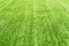 Green grass texture for background abstract. Green grass texture for background or abstract Royalty Free Stock Photography