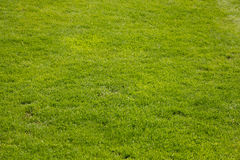 Green grass texture for background Stock Photography