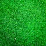 Green grass texture for background Royalty Free Stock Photos