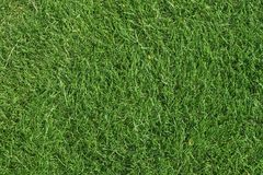 Green grass texture background stock image
