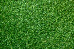 Green grass texture for background. Green lawn pattern and textu. Re background. top view royalty free stock images