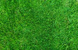 Green grass texture for background. Green lawn pattern and texture background. Close-up stock photo