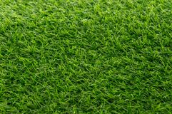 Green grass texture background pattern.  Stock Photography