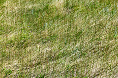 Green Grass Texture Background Pattern Stock Photo
