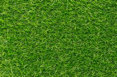 Green grass texture background pattern.  Royalty Free Stock Image