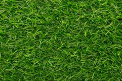 Green grass texture background pattern Royalty Free Stock Photography