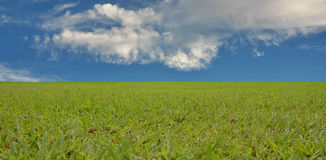 Green grass texture  background and sky Stock Photo