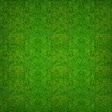 Green grass texture background for soccer sport or football spor Stock Images