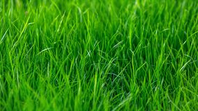 Green grass texture background in summer garden. nature concept.  stock photo