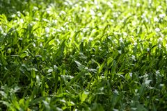 Green grass texture background with sunlight Royalty Free Stock Photos