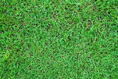 Green grass texture background. Top view royalty free stock image