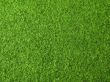 Green grass texture background. Top view Stock Photography