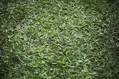 Green Grass Texture For Background Royalty Free Stock Images