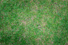 Green grass texture background, wall natural Stock Photo