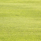 Green grass texture and backgrounds Stock Photo