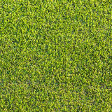 Green grass texture and backgrounds Royalty Free Stock Photography